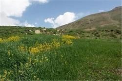۷ تعاونی و ۱۱ سمن منابع طبیعی در جنوب کرمان فعالیت می کنند
