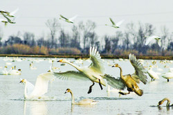 Mazandran province heaven for migratory birds