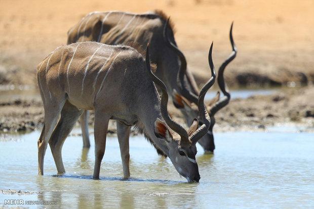 زیبایی های نامیبیا