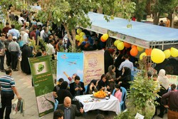 جشنواره شکرانه برداشت مرکبات در دزفول برگزار شد