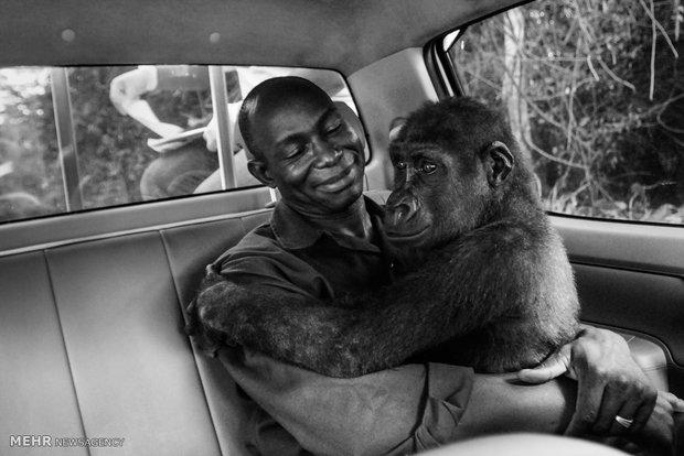 برندگان مسابقه عکاسی حیات وحش 2018