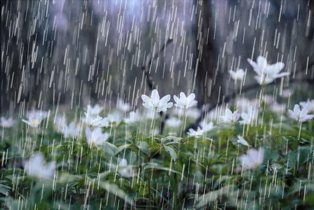 تداوم بارش باران در استان سمنان/ شاهرود یخ زد/ کالپوش برفی شد