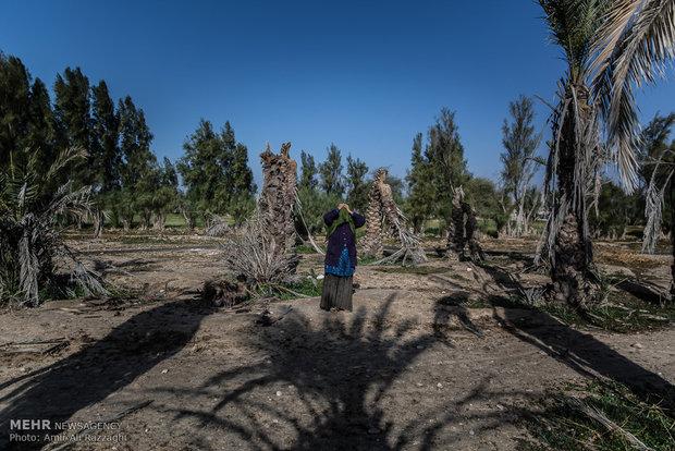 مریم زنی 40 ساله از اهالی روستای منصورآباد است که از 30 خانوادهی آن تنها 10 خانواده در روستا ماندهاند. نخلستان خانوادهی او به دلیل خشکسالی از بین رفته است، مردان روستا به دنبال کار به روستاهای اطراف و کار روی زمینهای مردم مهاجرت کردهاند.