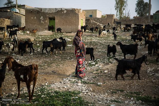 دامداری شغل بیشتر مردان روستاهای بوشکان بوده است. کمبود آب و از بین رفتن علوفه سبب تلفات بسیار در سالهای گذشته شده است. بیشتر دامداران به چوپانی و نگهداری از گلهی دیگر دامداران روی آوردهاند.