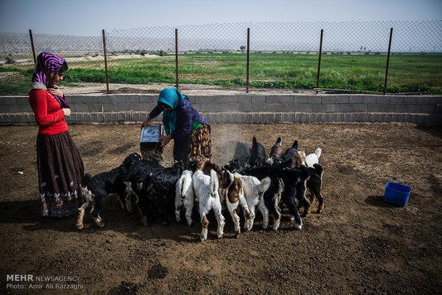 مردی دامدار به بزهای گله علوفه میدهد. بز نقشی مهم در اقتصاد و خوراک روستاییان منطقه دارد، نبود علوفه سبب سوءتغذیه و از بین رفتن بسیاری از گلههای بز در سالهای اخیر شده است.