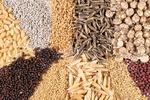 الحاق به کنوانسیون UPOV؛ کشت بذر وارداتی، برداشت محصول وابستگی!