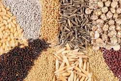 Iran, Turkey to coop. in seed industry
