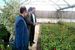 تولید گل و گیاه تخصصی در شهرداری بیرجند/۵۲۰۰ اصله نهال تولید شد