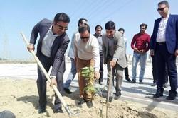 توسعه فضای سبز و جنگلکاری شهر بوشهر با جدیت دنبال میشود