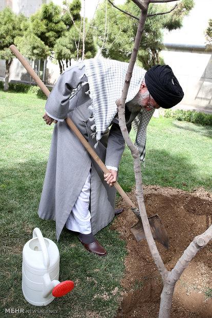 کاشت نهال در هفته منابع طبیعی توسط رهبر انقلاب