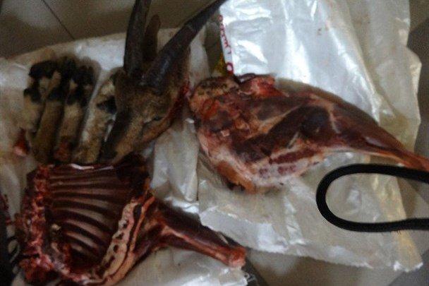 ۳ لاشه کل در رودبارک مهدیشهر کشف شد
