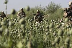 تولید مواد مخدر در افغانستان