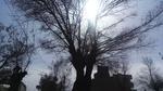 وزش باد شدید در چهارمحال