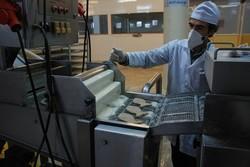 ۱۰ درصد تولید خوراک آبزیان مازندران صادر شد