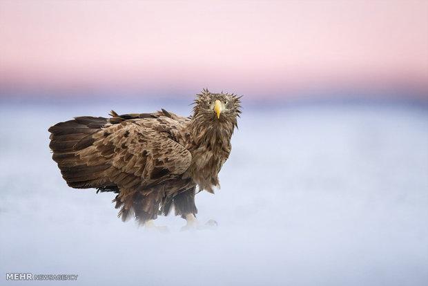 فینالیست های مسابقه عکاسی پرندگان