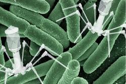 حل مشکل مقاومت در برابر آنتی بیوتیک ها با ویروس باکتری خوار