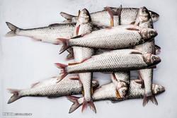 بازار ماهی فروشان انزلی، چند روز مانده به عید نوروز