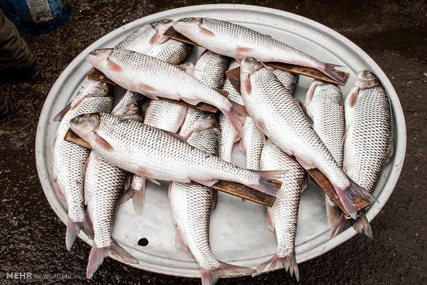 مهلت یک ماهه به بازار ماهی فروشان خرمشهر برای ساماندهی