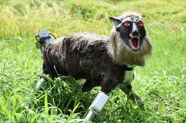 گرگ رباتیک از مزرعه ژاپنی ها محافظت می کند