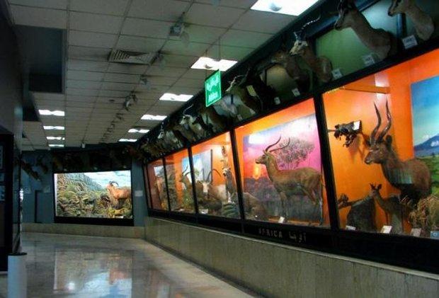 موزه تنوع زیستی پارک طبیعت پردیسان تعطیل شد