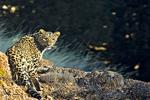 لذت تماشای حیات وحش ایران در  پارک ملی تندوره درگز