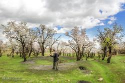 Hamedan's spring nature