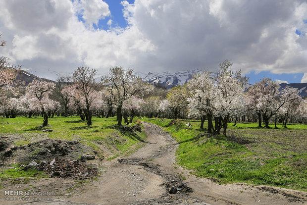 طبیعت بهاری همدان
