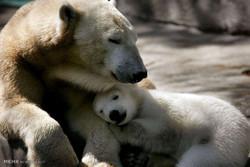 حس مادری در میان حیوانات