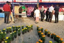 اولین جشنواره بهاره گلهای دزفول آغاز به کار کرد