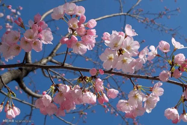 فرا رسیدن فصل بهار