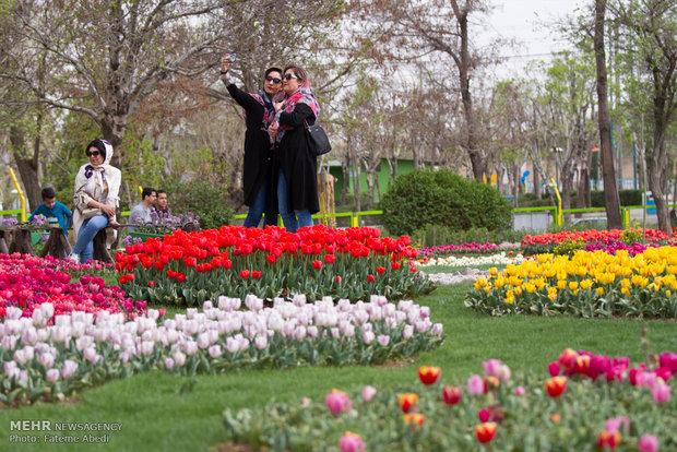 جشنواره گل های لاله در اراک