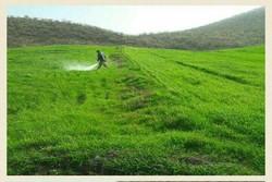 سمپاشی کشاورزی