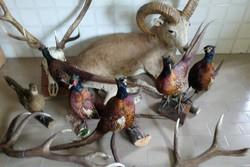 کشف اجزای شکار شده حیوانات وحشی در منزل دو شکارچی