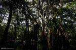 درختان نبض دارند و شبها حرکت می کنند!