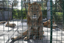 Seven substandard zoos shut down
