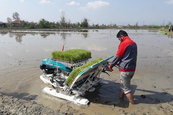 محصولات کشاورزی مازندران رقیب ندارند/ نبود منع قانونی کشت ۲ برنج