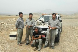 دستگیری صیادان غیرمجاز ماهی در پلدختر