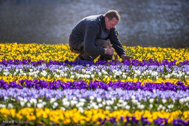 لمسات الربيع