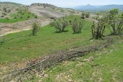 ۵۷ هزار مترمربع اراضی ملی در تنکابن خلع ید شد