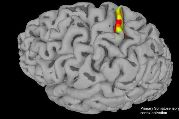 ارتباط سیگار کشیدن و دیابت با تشکیل کلسیم در مغز