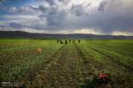 ترمیم ایستگاههای آبرسانی به مزارع کشاورزی در نقاط زلزله زده