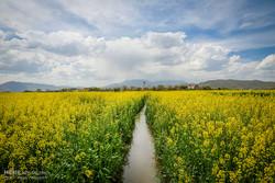 کاهش ۲۹ درصدی مصرف آب کشاورزی در حوضه دریاچه ارومیه