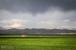 آمادگی ایران برای همکاری با غنا در زمینه تحقیقات و ترویج کشاورزی