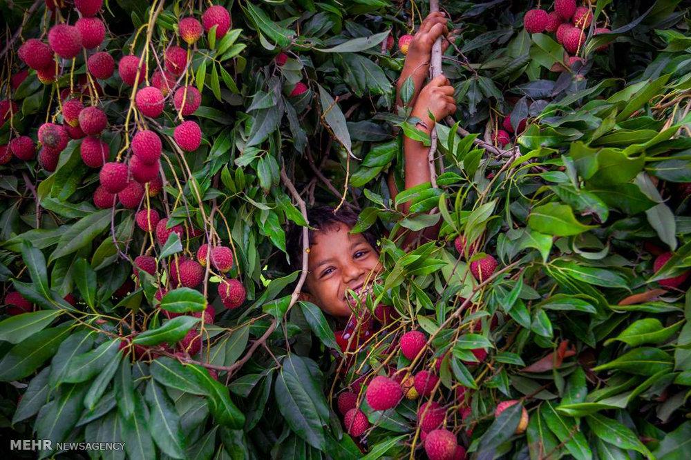 آثار برگزیده مسابقه عکاسی غذا