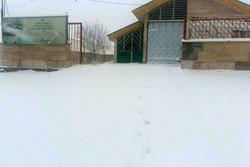 بارش برف در امام زاده هاشم دماوند