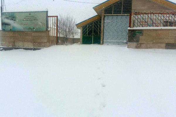 برف بهاری در ارتفاعات تهران/ از تعطیلی مدارس تا سرمازدگی باغ ها