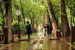 صباح ربيعي ماطر ومزهر في سماء طهران