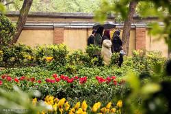 روز بارانی در باغ ایرانی