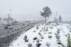 بارش برف و باران در البرز / دمای منفی ۵ درجه در دیزین