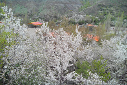 طبیعت زیبای روستای زشک در فصل بهار